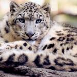 【デリヘル体験談】三宮の子猫ちゃんはどエロい女豹だった!